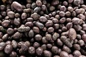 Small purple potatoes