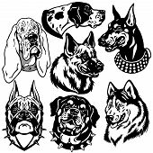 image of doberman pinscher  - set with dogs heads icons - JPG