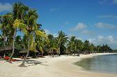 stock photo of mauritius  - Sandy beach with palm three in Mauritius island - JPG