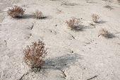 Cracked Soil Ground