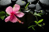 Spa Concept  Of  Blooming Pink Hibiscus, Green Tendril Passionflower And Zen Stones With Drops, Refl
