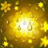 Rain Drop Shows Bloom Florals And Petal