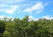 Treetop View With Clouds And Blue Sky