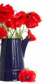 posy of poppy flowers