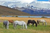 Fabulous lake in the mountains. Ashore are grazed herd of horses of different colors. South American