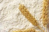 soft wheat flour with ripe wheat ear