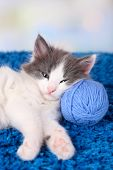Cute little kitten lying on blue carpet, on light background
