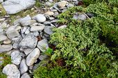 image of laplander  - Stones and green moss in Lapland close - JPG