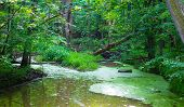stock photo of boggy  - A river winds through a forested wetland - JPG