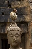 Monkey Sitting Perched On Buddha Head