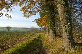 Trees along a dirt road at fall
