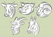 Collection Of Heads Animals For Design