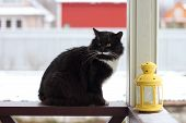 Serious cat  at terrace