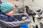 Boy And Pigeon