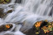 Beautiful waterfall with yellow leaves in the foreground