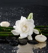 picture of gardenia  - Spa still life with gardenia and bamboo grove  - JPG