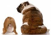 Dog Backside
