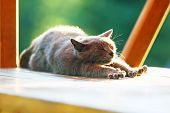 Brown Cat Stretching On Wooden Stand