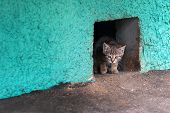 Homeless Kitten Cat Looking From A Cellar Hole.