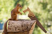 Squirrel The Carpenter