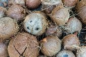picture of hairy  - background of stack of hairy brown coconuts - JPG