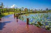 stock photo of swamps  - Recreation park wuth wooden wakway and lotus swamp - JPG