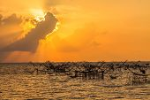 stock photo of trap  - Fishing Trap in the morning Phatthalung province Thailand - JPG