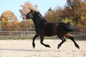 pic of arena  - Gorgeous brown horse in arena with autumn background  - JPG