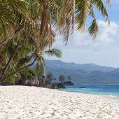 pic of boracay  - Tropical beach with beautiful palms and white sand Philippines Boracay Island  - JPG