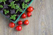 picture of tomato plant  - seedling plants cherry tomatoes and tomato fruits - JPG