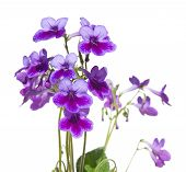 stock photo of nod  - Purple - JPG