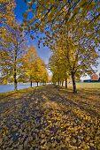 Walkway Thru The Leaves