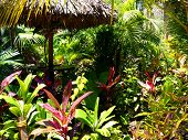 Rainbow Of Tropical Plants Around A Thatch Umbrella
