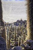 giant cactus island salar de Uyuni Bolivia car tracks in salt