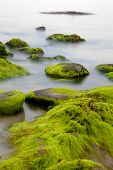 stock photo of irish moss  - Big boulders at Irish coast covered with green seaweed long exposure makes seawater look like mystery fog - JPG