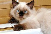 Staring Kitten