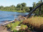 Rampike Volga River Bank