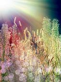 plantas de verão sob o sol
