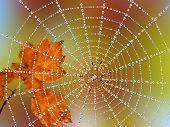 Spin in een web met dauw druppels
