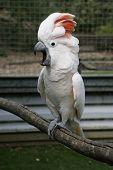 Squarking Parrot