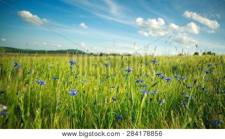 Green Flowering Meadow With Spring