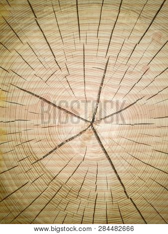 Slice Of Wood Timber Natural