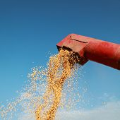 stock photo of auger  - Grain auger of combine pouring soy bean - JPG