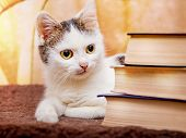 The White Cat Lies Near The Stack Of The Book. Visiting The Library. The Best Libraries Of The World poster