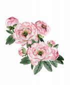 Bouquet Of Peonies poster