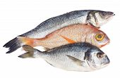 elección de pescado fresco