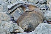 Seal Colony, Kaikoura Coast, New Zealand Summer 2011.
