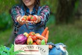 Asian Happy Women Farmer Holding A Basket Of Vegetables Organic In The Vineyard Outdoors Countryside poster