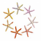 Collection Of Starfish Hand Drawn With Colorful Watercolor Texture, Vector Illustration. Handmade Fr poster
