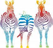Rainbow Zebra.eps